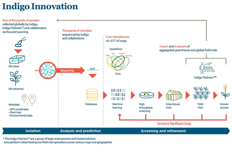 Indigo Innovation