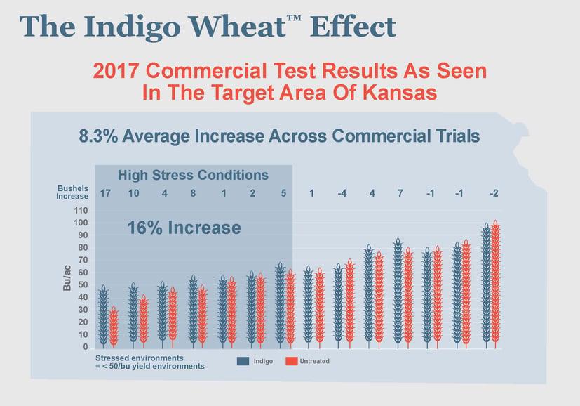 The Indigo Wheat Effect[1].jpg